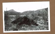 Rppc Ak Alaska, Kodiak Bear Johnston photo #1461