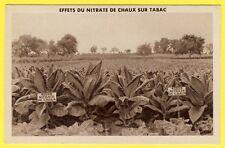 cpa RARE Agriculture EFFETS du NITRATE de CHAUX sur Plantation de TABACS