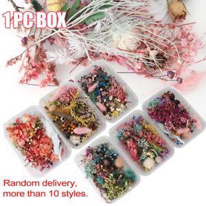 Box  Getrocknete Blumen DIY Basteln Trockenblumen Schmuck Epoxidharz Dekorieren