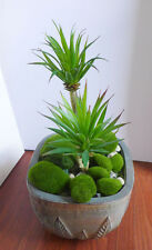 Set of 11 Artificial Plants With Succulents Grass
