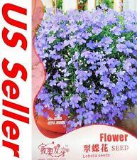 Blue Lobelia Seeds G77, 120 Seeds Blue Lobelia Erinus Garden Flowers
