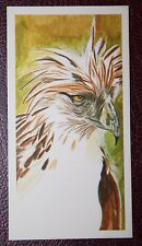 Philippines Monkey-eating Eagle    Superb Illustrated Colour Card