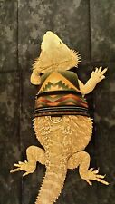 Lil' Bestie Bearded Dragon reptile Harness and Leash SOUTHWESTERN VEST