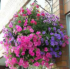 BALCONY FLOWER MIX  0.5g seeds - Lobelia Petunia Marigold Busy Lizzie Snapdragon