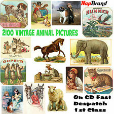2100 VINTAGE ANIMAL PICTURES