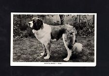 ST BERNARD DOG ~PHOTOGRAPHIC POSTCARD ~ KENTS BANK 'RIGI' ~  SAINT BERNARD~USED