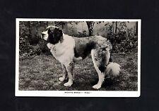 ST BERNARD DOG ~PHOTOGRAPHIC POSTCARD ~ KENTS BANK 'RIGI' ~  SAINT BERNARD~USED