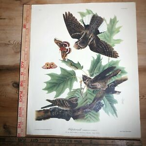 Vintage JJ Audubon Print 17 Whip poor will chasing Butterfly Plate LXXXII 16x20