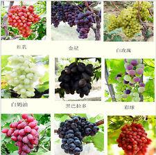 90 seeds/pack, Mixed, grape fruit seed seed fruit tree seedlings