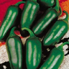 200 Jalapeno M Pepper Seeds 75 Days Chili pepper Seeds