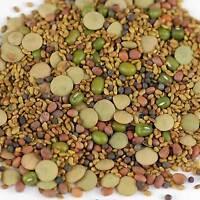 5 PART SPROUT SALAD MIX-ALFALFA - BROCCOLI - RADISH - LENTIL - MUNG SEEDS - GROW