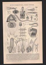 Lithografie 1897: Schutzmittel der Tiere. Krallen Gift-Zähne Stink-Drüsen