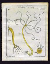 Freshwater polyps  - Roesel Insecten-Belustigung 1755 Natural History Print