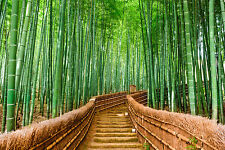 Hermoso Bosque de Bambú Lienzo cuadro #37 impresionantes Paisaje Lienzo de decoración del hogar