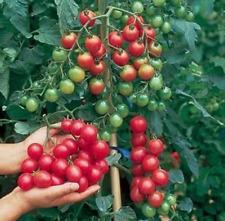 100Pcs Tomato Cherry Vegetable Seeds Ordinary Tasty Food Kitchen-Garden No GMO