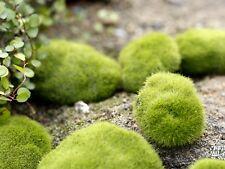 Garden DIY Mushroom Craft Pot Fairy Dollhouse Fake Moss Lawn for Miniature