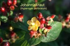 ***Johanniskrautöl, Hypericum perforatum, 50ml