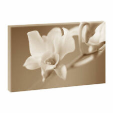 Deko-Bilder & -Drucke mit Panorama von Blumen & Gärten