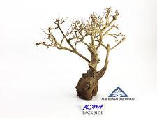 Aquarium Bonsai Driftwood Ornament for Moss Tree Shrimp Fish -Size Mini- AC767