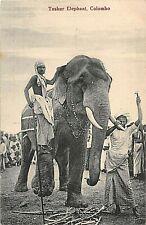 POSTCARD  CEYLON  TUSKER ELEPHANT  & KEEPERS