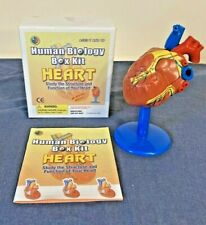 3D Model Heart Human Biology Box Kit Study Of Structure & Function FREE SHIP!