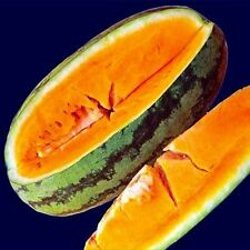Orangeglo Watermelon 20 Seeds Sugary, Delicious, and Crisp Fruits