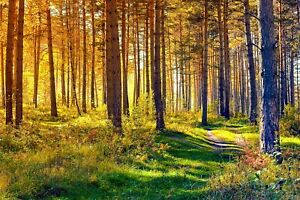 WOODLAND FOREST TREES CANVAS PICTURE PRINT WALL ART UNFRAMED 39