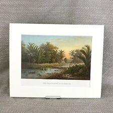 Antique Victorian Print Amboyna Sago Palm Trees Ambon Island Indonesia