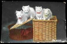 OLD POSTCARD OF CATS / KITTENS