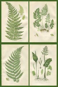 Lot of 4 Original Antique Victorian PRATT Fern Prints Botanical c1870 - Lot 24