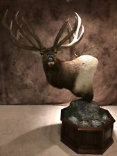 Replica of the World Record Silvertine Bull Elk.Amazing Mount!