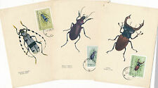 6 Maxi-Cards Käfer, Beetle aus Polen  4/5/15