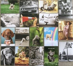 Lot of 17 Avanti Greeting Cards Funny Dogs Cats Birthday Thanks Hello Encourage