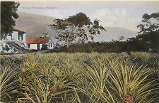1905-1915 Chromograph Postcard; Ripley Pine-Apple Plantation, Jamaica, Unposted