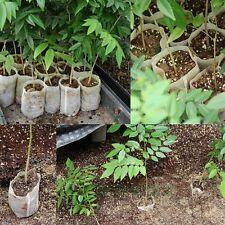 100pcs Nursery Pots Plants Pouch Seedling-Raising Bags Home Garden Supplies