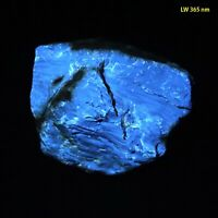 bb: Black Amber from Sumatra - Huge 500+ Carat Piece, Bright Blue-Fluorescent!
