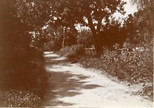 Tunisie, Tunis, la villa Marcelle, vue sur le jardin  Vintage citrate print,