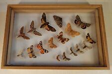 lot de papillons avec boite de conservation entomologie
