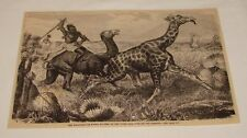 1878 magazine engraving ~ Aggageers Pursuing The Giraffe