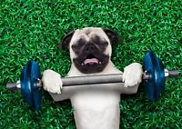 Funny Weight Lifting Pug Dog Poster Size A4 / A3 Cute Animals Poster Gift #8587