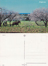 1980's WORKING IN THE ORCHARD ALGARVE PORTUGAL UNUSED COLOUR POSTCARD