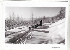 "*POSTCARD-""Man On Sleigh w/Alaskan Dogsled"" ...in The Snow-  (B357)"