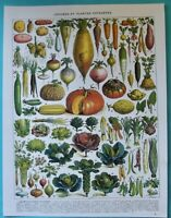 Affiche art print légumes et plantes potagères d'autrefois Navet Choux Haricot