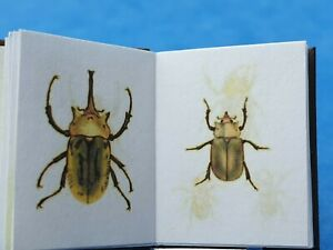 1/12 scale Book, Natural History of beetles ,1846,Crafted by Ken Blythe