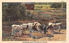 Van Buren Maine Cow Pasture Greeting Antique Postcard K83725