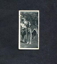 Carreras - 1936 - Dogs & Friends - No 45 - The Saluki