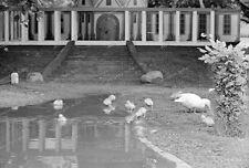negativ-1930-Hamburg-Tierpark Stellingen-Hagenbeck-Tiere-Ente-8