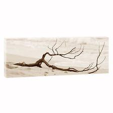 Strandgut Bild auf  Leinwand Strand & Meer Poster XXL 150 cm*50 cm 043 sepia