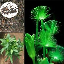 Emerald Rare Night Flower New Seeds Emitting 100Pcs Fluorescent Plants Light