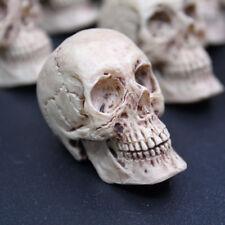1 pcs 1/6 résine fait anatomique crâne tête de scènes Accessoires pour 12 in (environ 30.48 cm). Chiffres